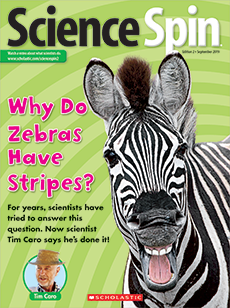 Why Do Zebras Have Stripes? Science Spin magazine.